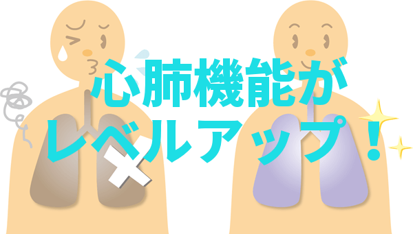 人体の肺を表した図